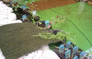 Pflanztaschen Selber Machen schwimmteich pflanztaschen schwimmteich bauen