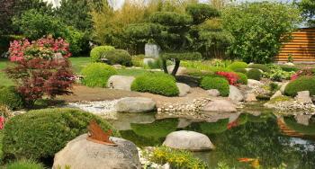 pflanzen im schwimmteich sind die gr ne lunge. Black Bedroom Furniture Sets. Home Design Ideas